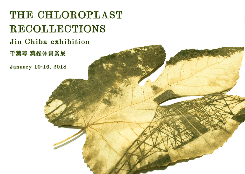 THE CHLOROPLAST RECOLLECTIONS Jin Chiba exhibition